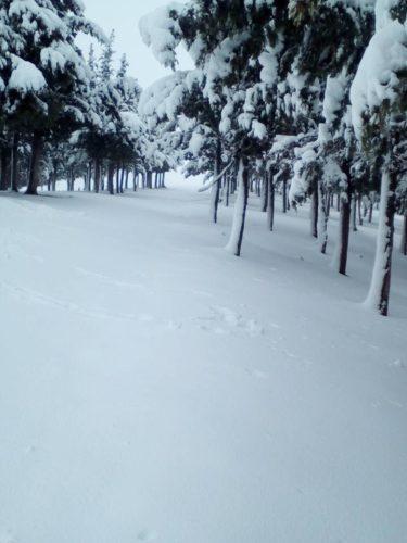 Berrouaghia médéa en neige