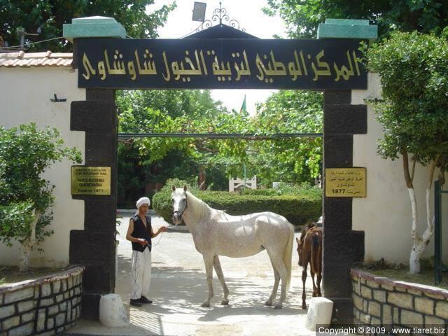 l'entrée Le centre d'élevage de chevaux à tiaret