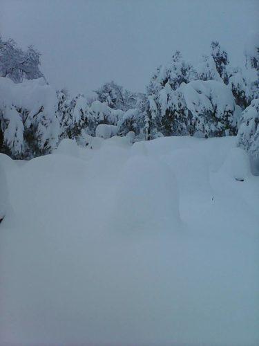 rucher en neige en algérie