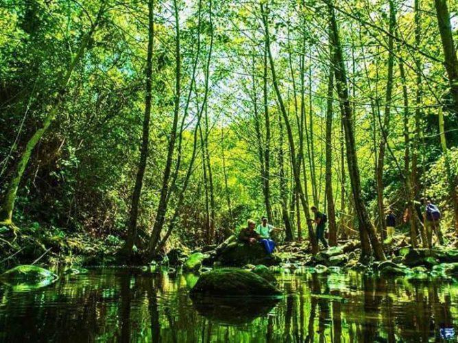 forêt à Seraïdi