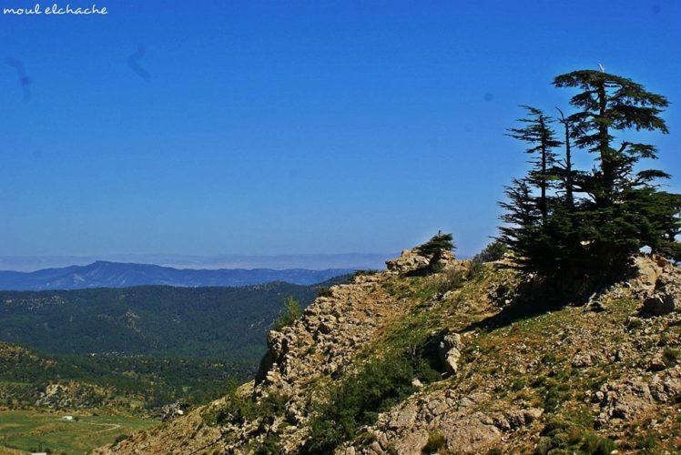 montagne de chélia batna