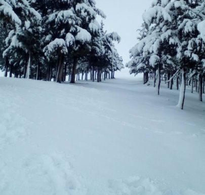Berrouaghia en neige
