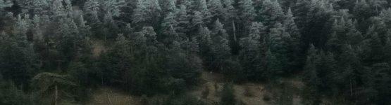 gel de l'eau dans une forêt de Khenchela
