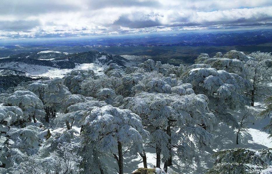 la neige au Parc national de Theniet El Had